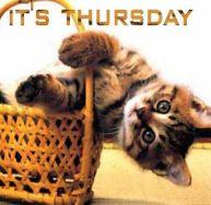 thursday_cat_basket